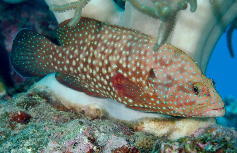 Xmas 2011 Club Dive Calypso Port Douglas 171 Nautilus Scuba
